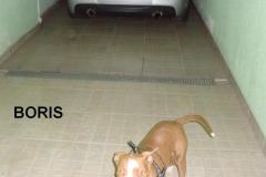 BORIS (3)